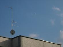 Piccione Sul Capannone, Antenna Tv