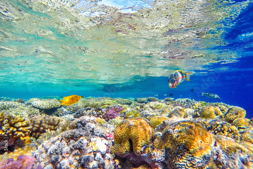 Fotobehang Koraalriffen colorful coral reef and bright fish