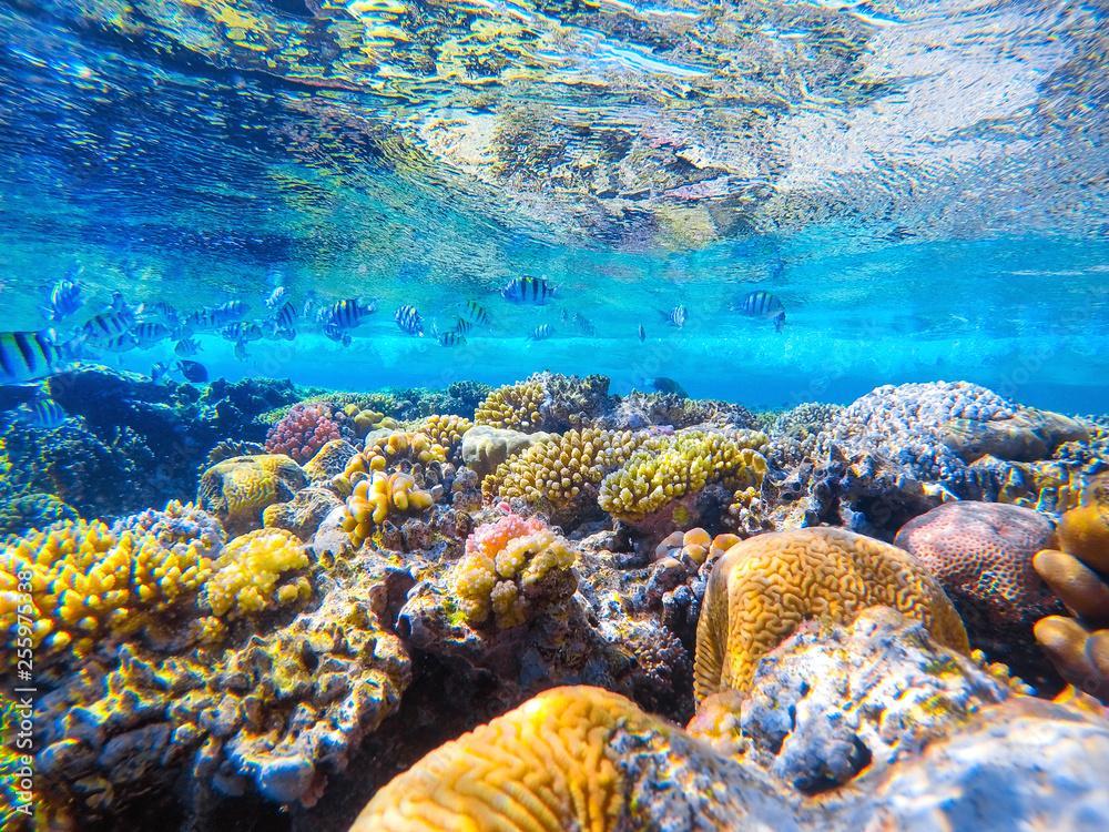 Fototapeta colorful coral reef and bright fish