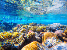 Colorful Coral Reef And Bright...
