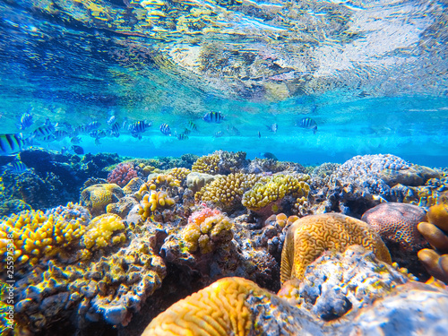 Photo sur Toile Recifs coralliens colorful coral reef and bright fish