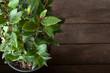 canvas print picture - Spices herbs laurel