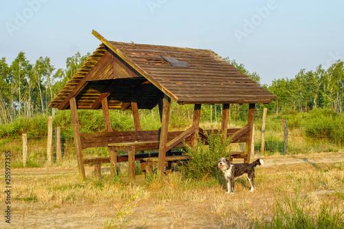 Photo Rastplatz Wolfsberg mit Hütte an Wanderweg auf der Döberitzer Heide und Hund