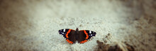 Butterfly Sits On The Sand. Web Banner.