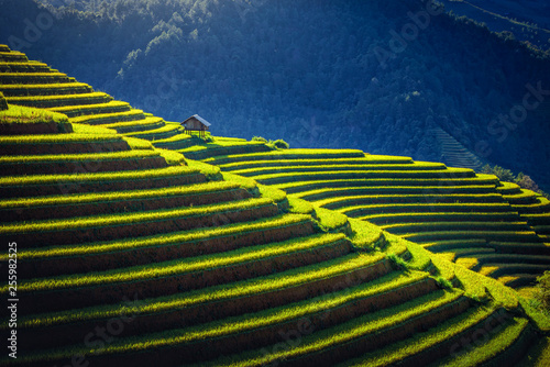 Foto  Rice fields on terraced with wooden pavilion at sunrise in Mu Cang Chai, YenBai, Vietnam