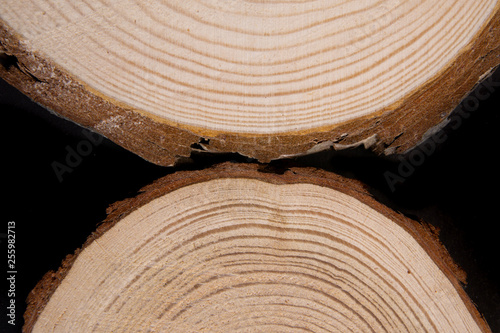 Wood cross-section with annual rings on black background Poster Mural XXL
