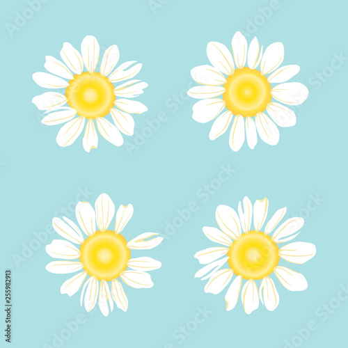 Set of White daisy or chamomile for background Fototapeta