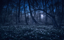 Majestic Spring Forest In A Moon Light