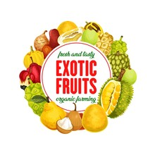 Exotic Fruits Isolated Vector Banner