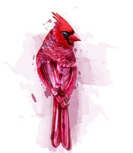 Cardinal Red Bird Watercolor V...