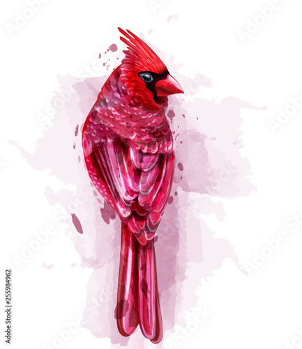 Photo  Cardinal red bird watercolor Vector