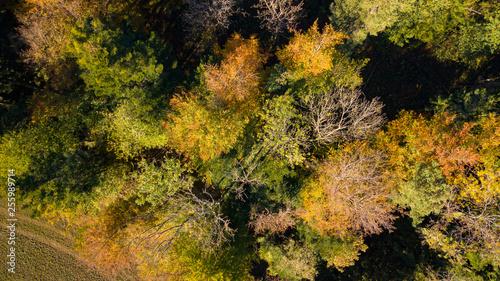 Fotografie, Obraz  top tree