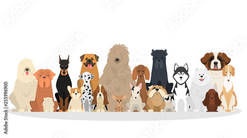 Slika na platnu Dog set. Collection of dogs of various breed
