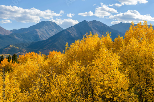 Autumn Mountains - Golden aspen trees shining in autumn evening sunlight at front of steep mountain peaks of Sawatch Range, Colorado, USA.
