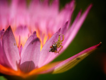 Spider Eating Insects It Can B...