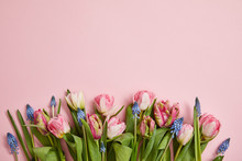 Top View Of Fresh Pink Tulips And Grape Hyacinths Arranged On Pink Background