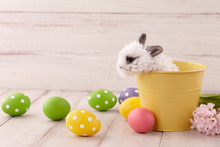 White Baby Bunny Rabbit In Yellow Metal Pot With Painted Eggs On White Wooden Planks. Easter Holiday Concept.
