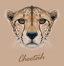 Cheetah Animal Cute Face. Vector African Wild Fast Cat Head Portrait. Realistic Fur Portrait Of Cheetah Isolated On Beige Background.