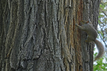 Closeup Detail Of The Trunk Of A Tree