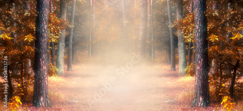 Fantasy autumn panoramic photo background with pine tree forest and mysterious foggy trail