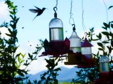 Hummingbird At Drinking Fountain In The Garden