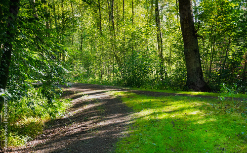 Foto op Plexiglas Groene Beautiful forest with bright sun shining through the trees. Gravel road through sunny green.