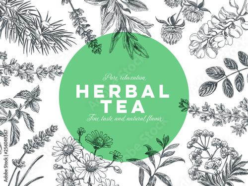 Fototapeta Vector hand drawn tea herb Illustration. obraz