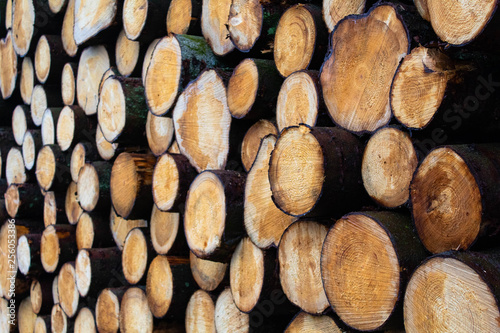 Foto op Plexiglas Brandhout textuur Stacked Wood in forestry.