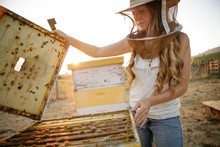 Woman Beekeeper Lifts Top Off Wooden Bee Hive Box