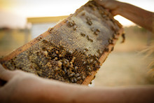 Close Up Of Honeycomb Frame And Bees From Hive Box