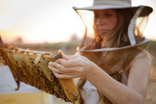 Woman Beekeeper Looks At Honeycomb Frame From Bee Hive Box