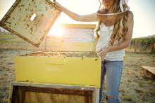Woman Beekeeper Lifts Top Of Bee Hive Box