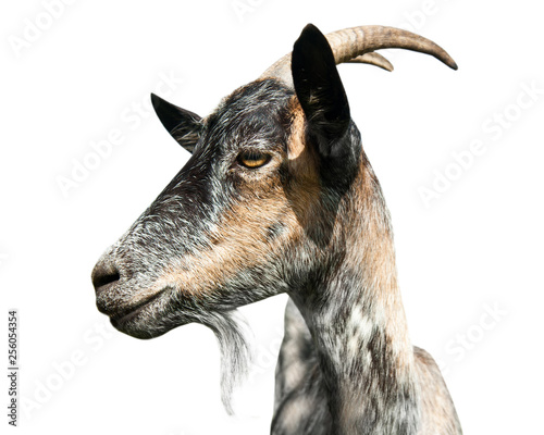 Photo grey goat portrait in profile, isolated on white background