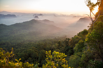 Wschód słońca rano widok na zielony las tropikalny