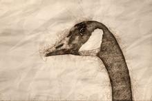 Sketch Of A Close Up Profile O...