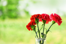 Red And Pink Carnation Flower Blooming In Glass Jar And Nature Green Background