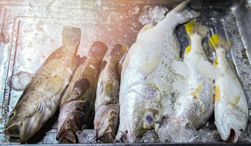 Fotografija  Fresh fish in ice bucket for sale in the seafood market