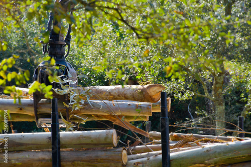 Fotografia  Pinzas de grúa recogiendo madera