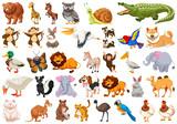 Fototapeta Fototapety na ścianę do pokoju dziecięcego - Set of wild animals