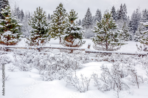 Fotobehang small fir trees with wooden rail fence covered with fresh snow on a cold winter day