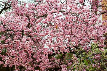 Obraz na Szkle Kwiaty The flowers bloom luxuriantly in spring.