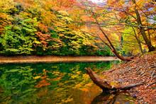 紅葉と鶏頭場の池と折れた木
