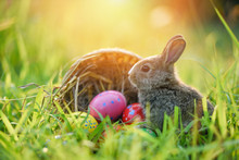 Little Bunny And Basket Decorated For Festival Easter Eggs Colorful On Meadow