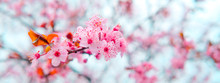 Spring Blossom Tenderness. Pink Flowers Of Cherry Plum Tree On Background Of Blue Sky
