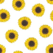 Floral Seamless Pattern With Sunflower Heads. Botanical Backdrop With Blooming Flower Or Cultivated Crop Hand Drawn On White Background. Natural Vector Illustration In Vintage Style For Fabric Print.