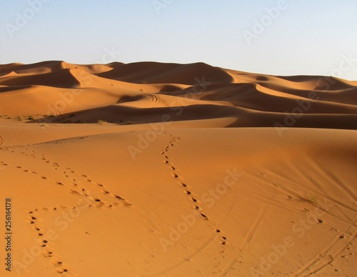 Foto op Aluminium Afrika Spectacular views in Sahara Desert. Sun colours its Beautiful Sand Dunes and creates astonishing shadows effects. Camel trekking and night in tents is a must