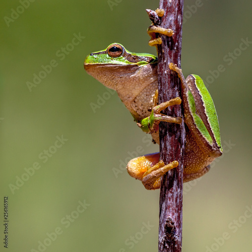 Photo Friendly Tree frog