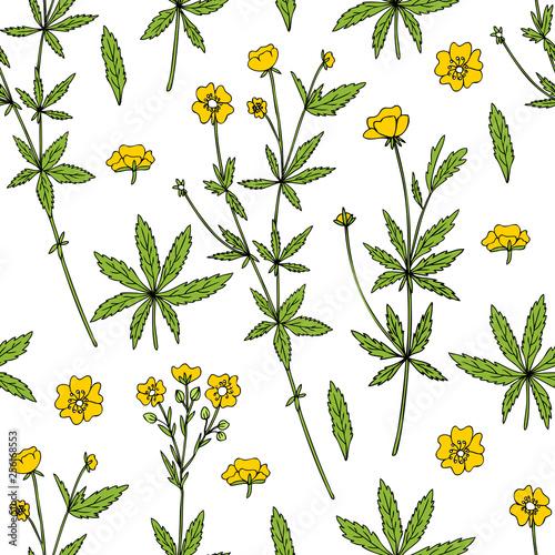 Fényképezés  Seamless pattern Cinquefoil flower, potentilla erecta, bloodroot vector hand dra