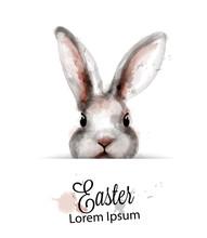 Easter Bunny Rabbit Vector Wat...