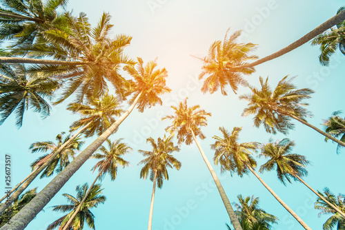 In de dag Palm boom coconut palm tree in seaside, summer vacation to tropical island concept for background.